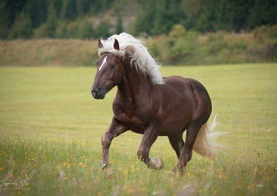 Pferdezucht Labachgut